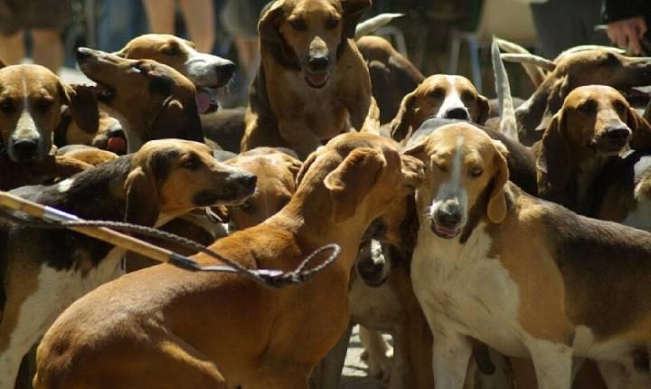 Coreia do Sul considera proibir o consumo de carne de cachorro