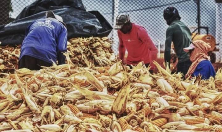 Fiscais resgatam 116 trabalhadores vítimas de trabalho análogo à escravidão em Água Fria de Goiás