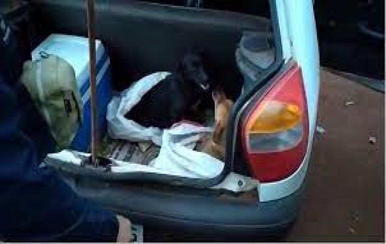 PRF prende três homens por maus-tratos a animais na BR-364, em Jataí