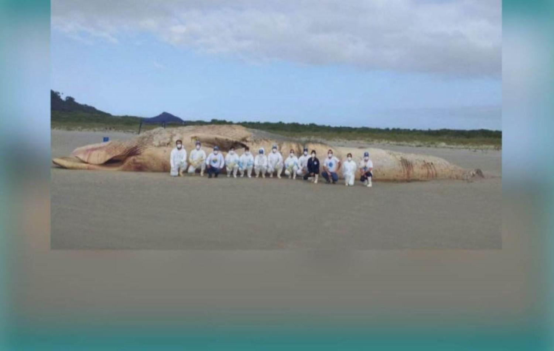 Baleia-fin de quase 20 metros é encontrada encalhada no litoral do Paraná